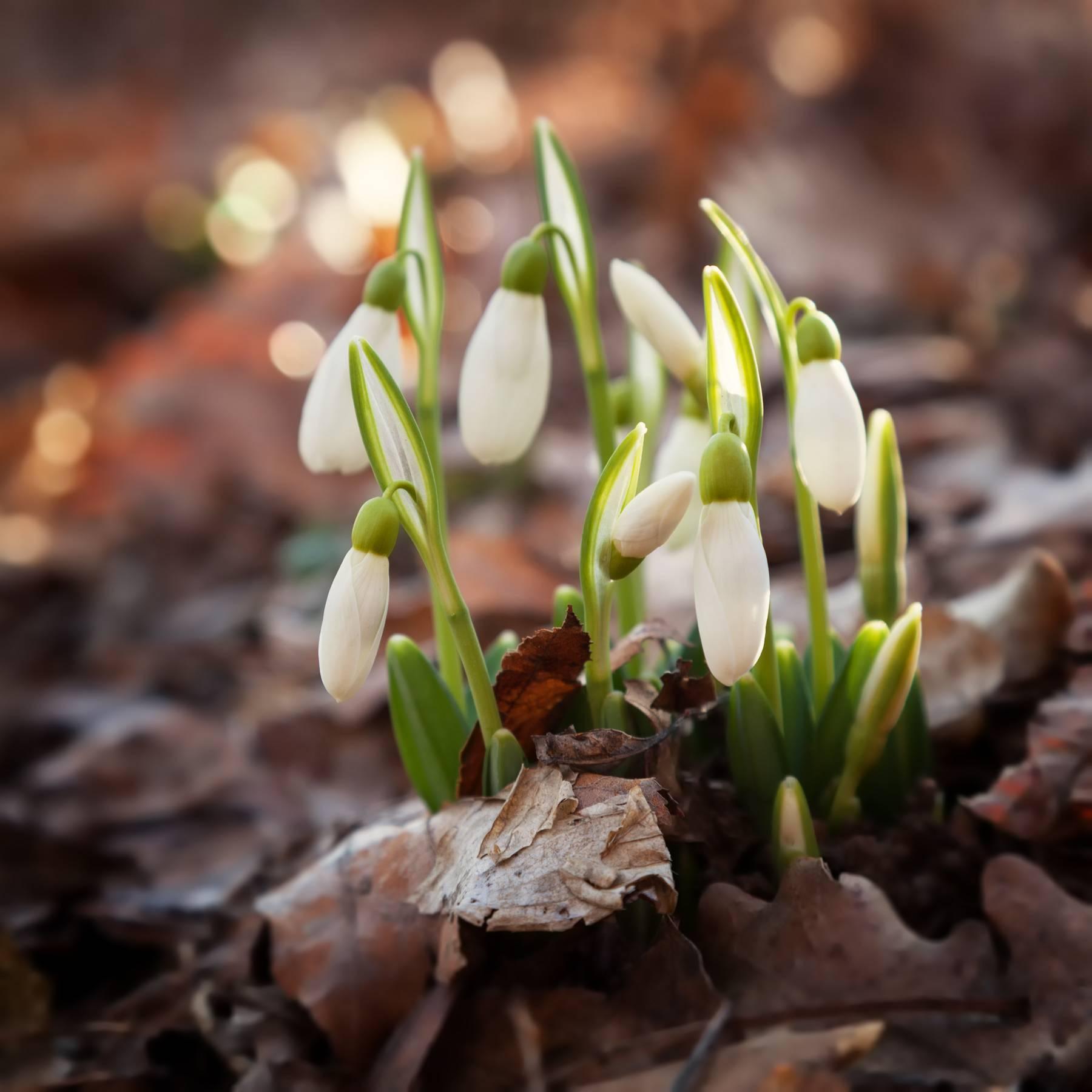 fiori-colonia-enrichetta