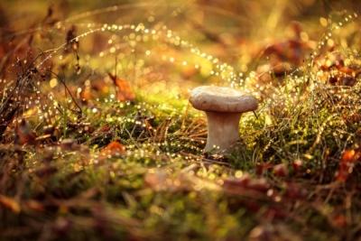 funghi-colonia-enrichetta